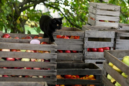 Cats on Apple Crates | by Chiot's Run