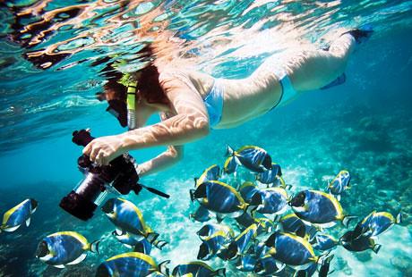 ... Snorkeling In The Hammocks At Marathon | By Bluegreen Resorts