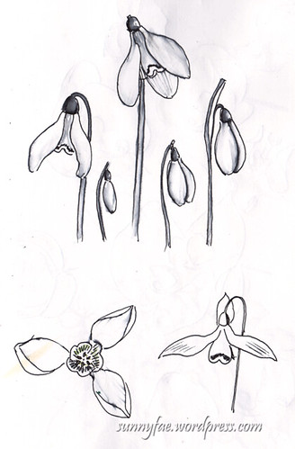 snowdrops in pen and ink