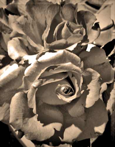 Sepia Duo | by meer cottage