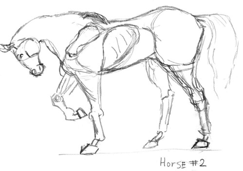 Horse Skeleton Part 2 I M Trying To Get A Better Feel