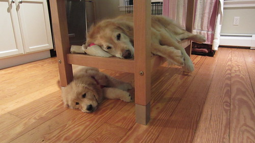 Bunk Beds! | by mswyni