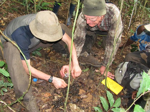 John and David collecting Okapi dung