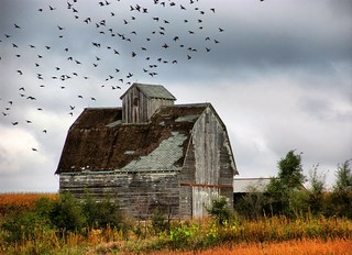 Farm Buildings | by cwwycoff1