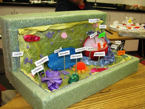PLANT CELL Florida Science Flickr