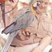 lovely large bird ~