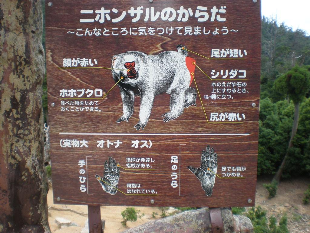 Basic Pay Chart: Japanese macaque body chart Mt. Misen Miyajima | Japanese u2026 | Flickr,Chart
