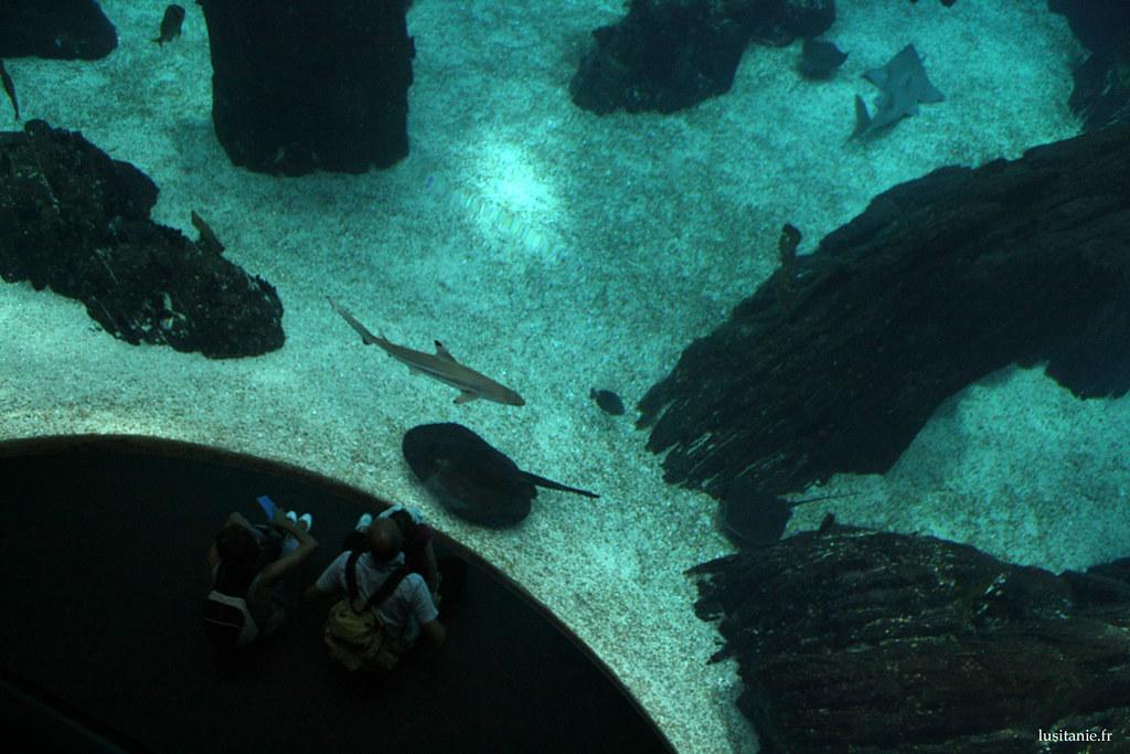 La vue plongeante du grand bassin est impressionante