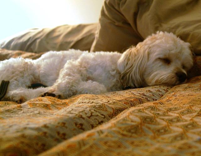 Noises Dogs Make When Sleeping