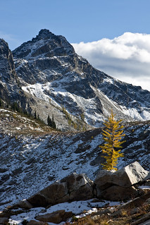 Lone larch
