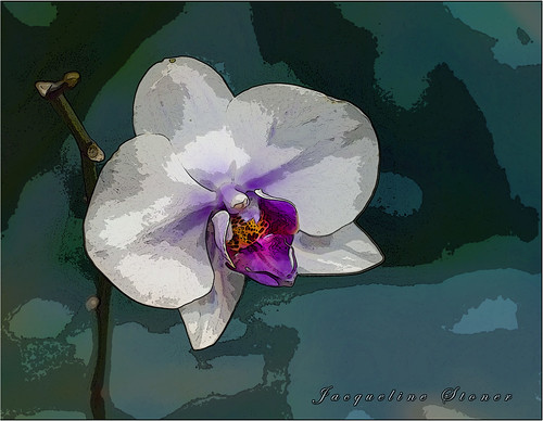Orchid Expression | by Jackie Stoner