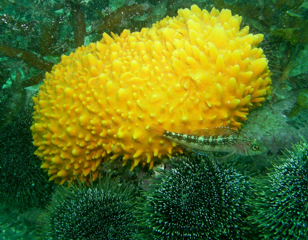 Sponge and Triple-fin fish | This is the real colour...haven… | Flickr