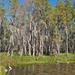 Shingle Creek, Florida, Nov. 2009