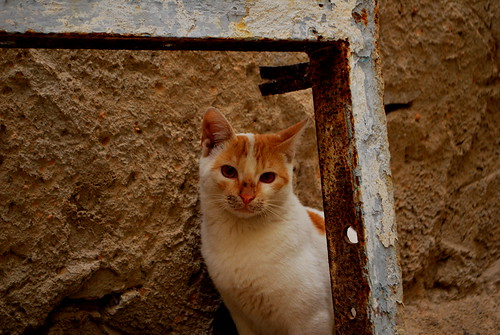 Sfax Cat | by goingslowly