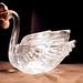 The Loudest Swan