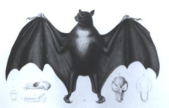 The Flying Fox | by Guampedia.com