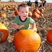 Bongo Pumpkin
