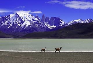 Chile llamas Chile