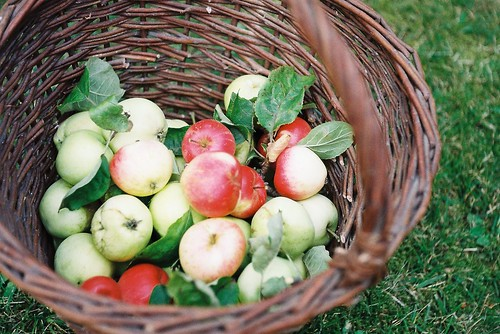 august apples | by no penny for them
