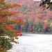 Adirondack foliage!
