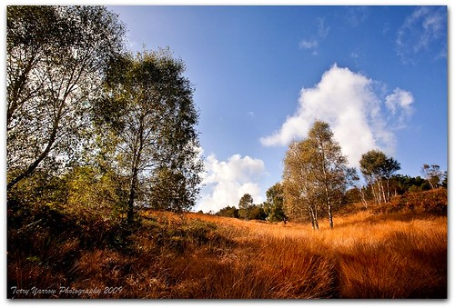 Dunyeats Hill Nature Reserve | by TDR Photographic