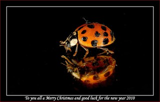 To you all a Merry Christmas and good luck for the new year 2010 | by jd.echenard