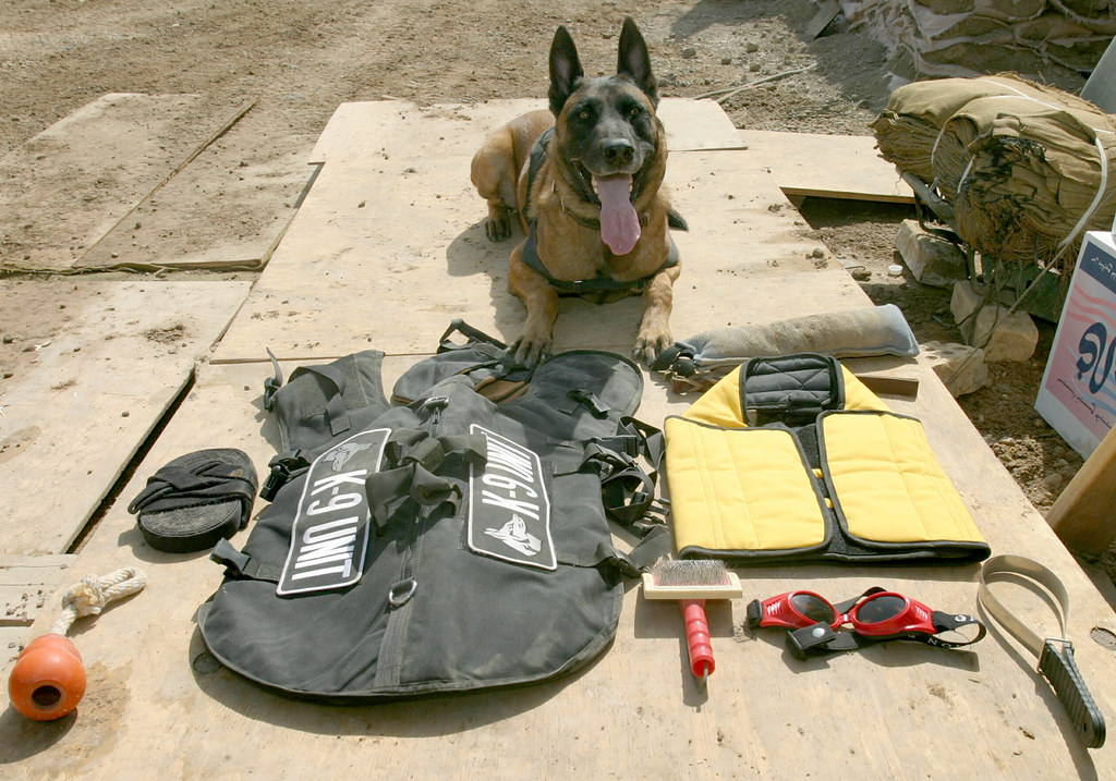 Service Dog Harness Blue Vest Amazon