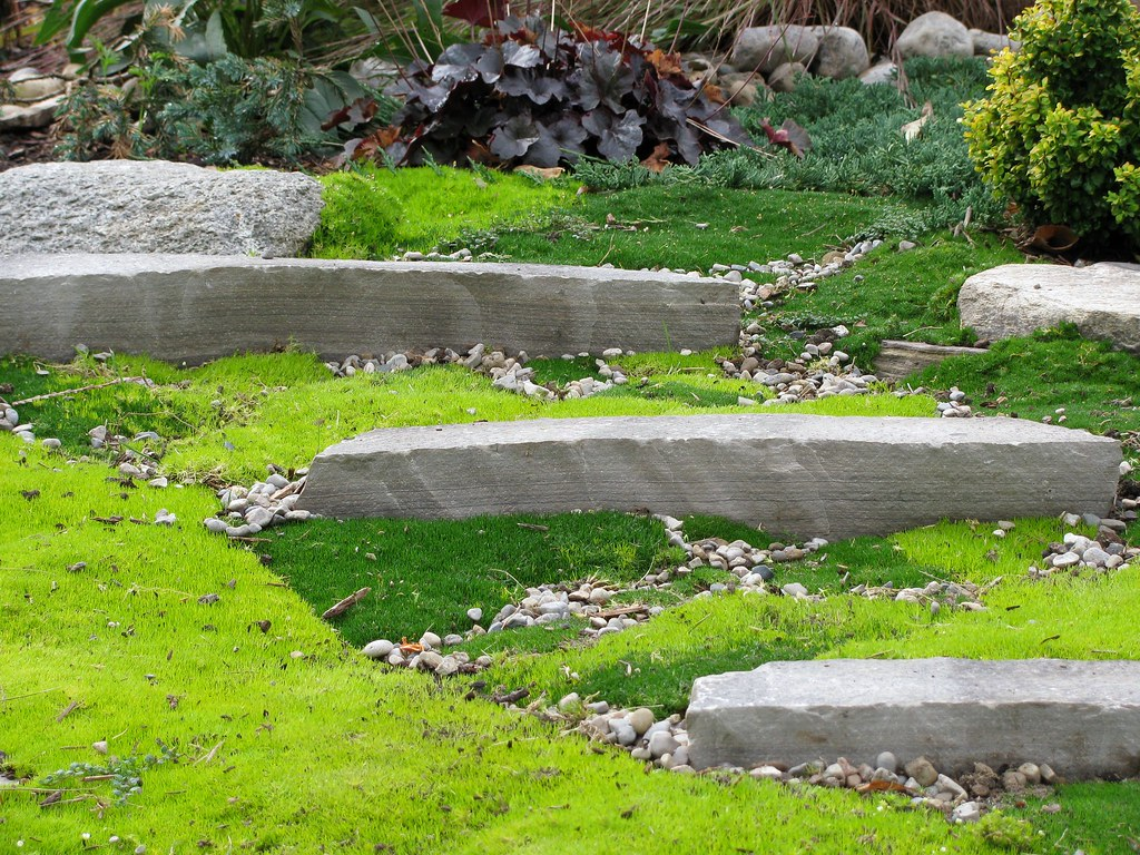 Landscaping With Irish Moss : New sagina subulata landscape front garden fall flickr