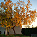 Autumn at The Huntington