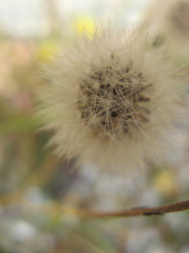 weed seed | by cathy cullis