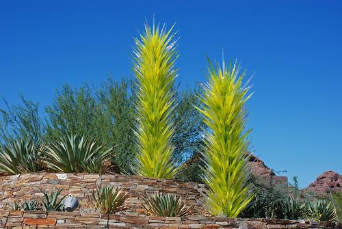 Phoenix Desert Botanical Garden 2009 Bright Green