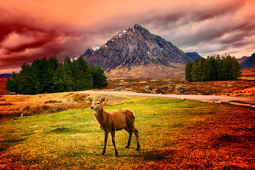 Deer Deer & The Buachaille Etive Mor | by Onlyonestasia