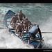 Surf Boat Lifesavers ~ Cronulla ~ Australia