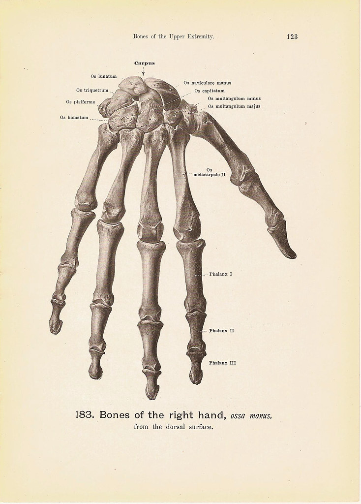 BONES of the Right Hand Engraving Anatomy Book Plate Print… | Flickr
