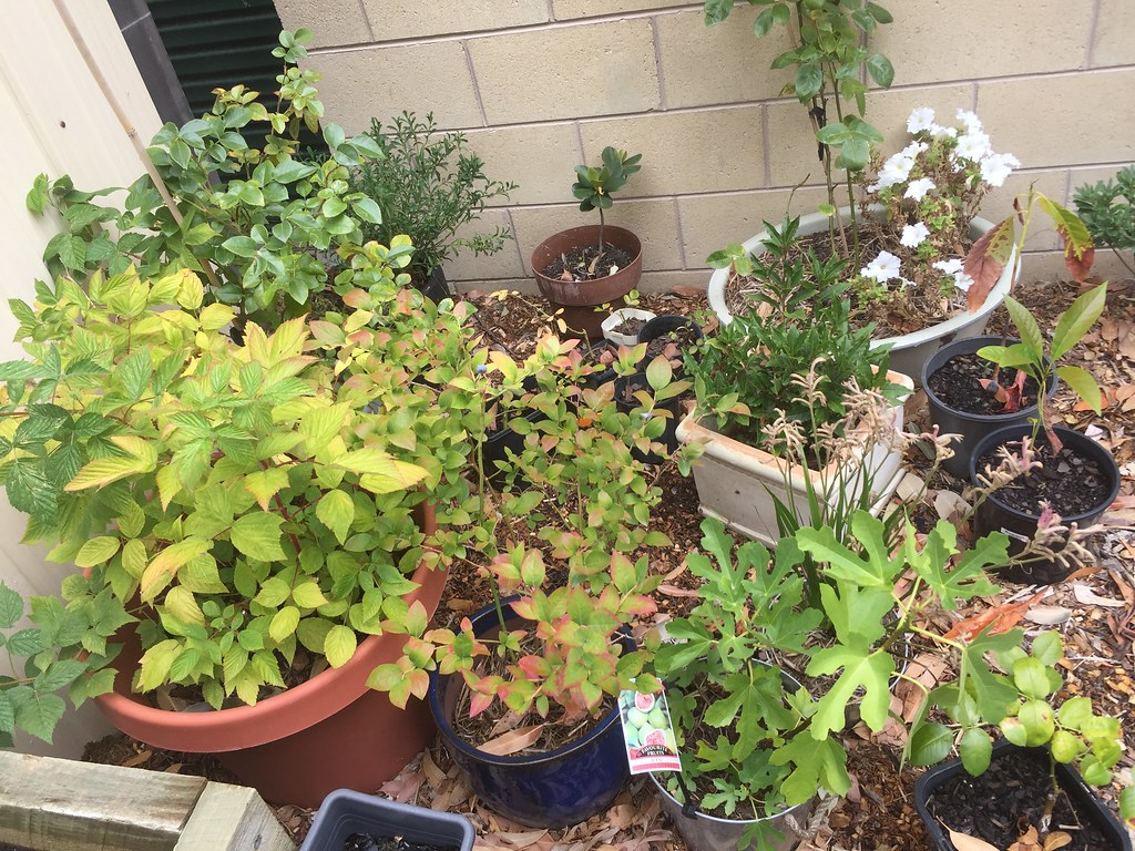 collection of pots with all manner of plants growing in them.
