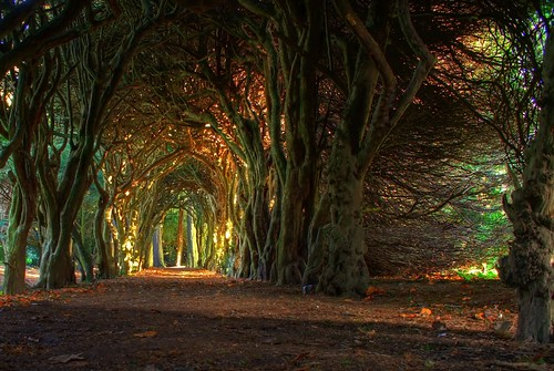 Fairytale tree tunnel. | by jacco55