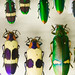 CC289 Insect Museum
