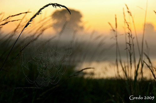 Sunrise Spider Web | by Gredo Goldenstein
