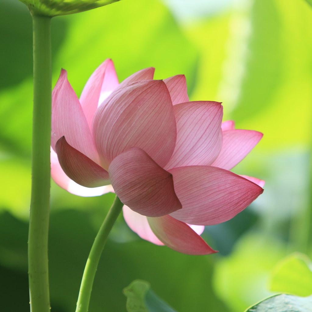 happy blooming have a wonderful weekend my friend