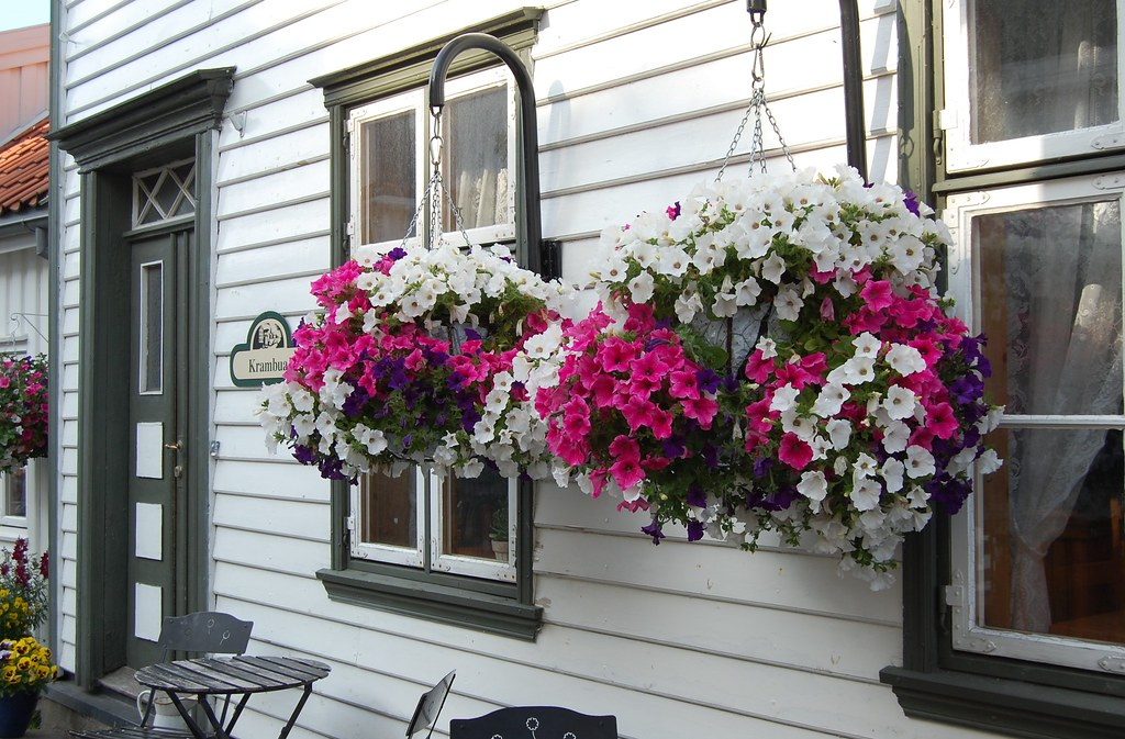 Цветы за окном фото - интернет-журнал inhomes.