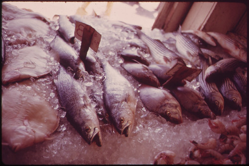 Fresh Fish for Sale in Sheepshead Bay, Fishing and Boating Center 05/1973 | by The U.S. National Archives