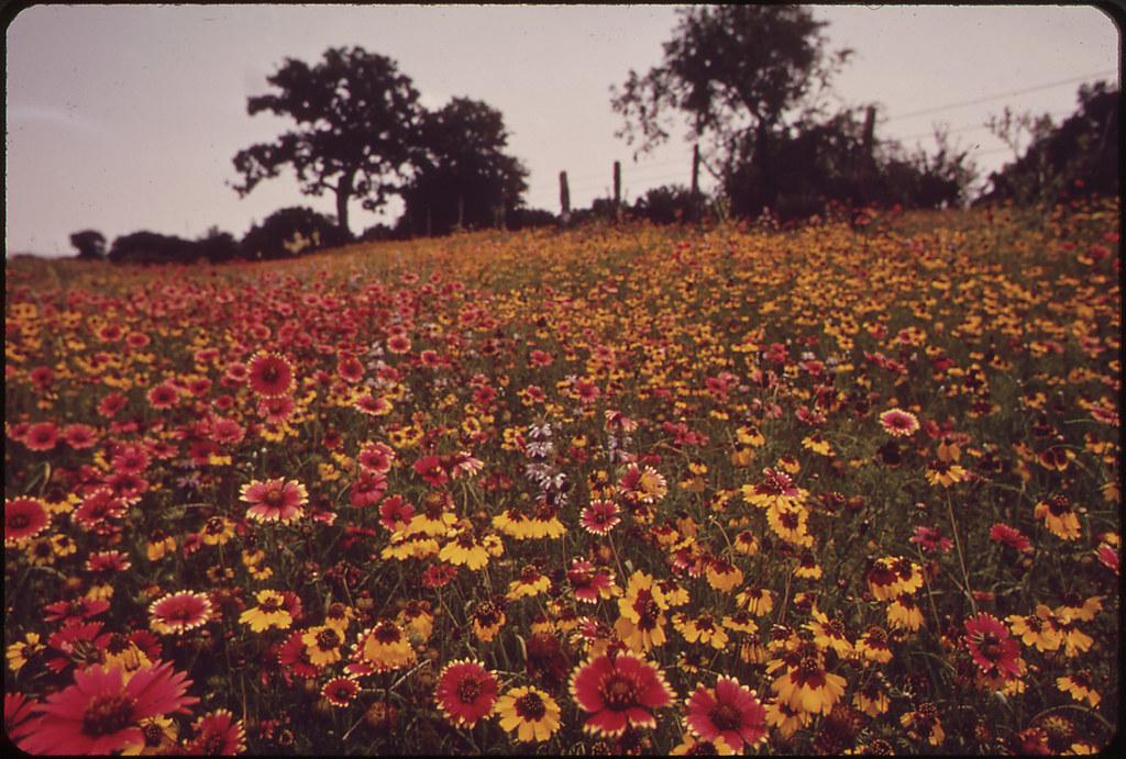 Field Of Flowers Original Caption Field Of Flowers Us N Flickr