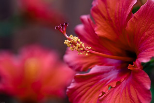 Yellow and Red | by =Tom=