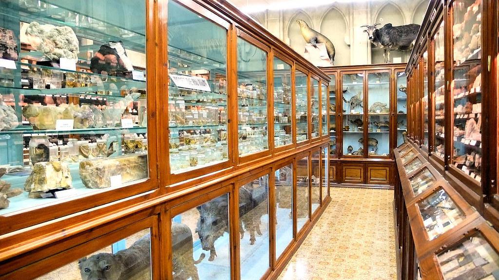 Museo de ciencias naturales la salle bonanova vista del for Piscina la salle bonanova