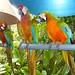 Jungle Island - Miami, FL