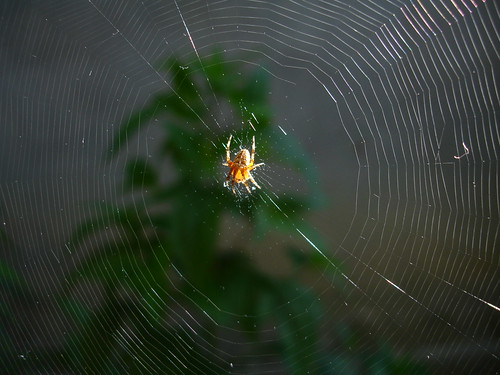 Spiral Orb Web | by Fermion