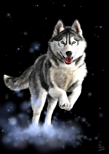 White Wolf Blue Eyes Face