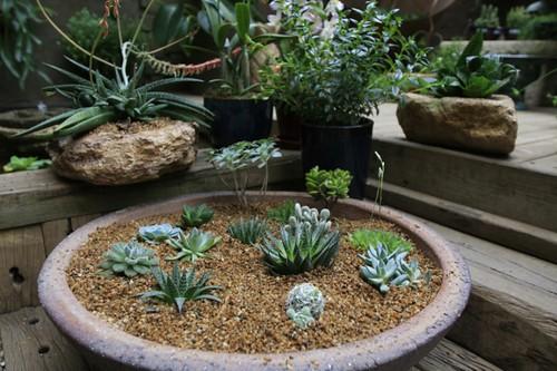 como é possível criar um cantinho verde rapidamente, com plantas