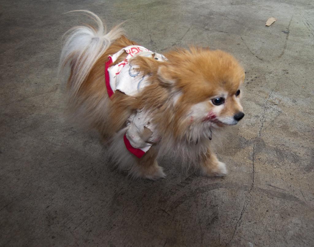 zombie dog! | ryan joy | flickr
