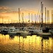 San Diego - Shelter Island Marina